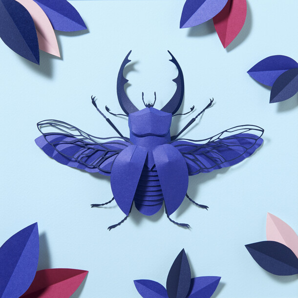 The Royal Blue Colorplan Beetle