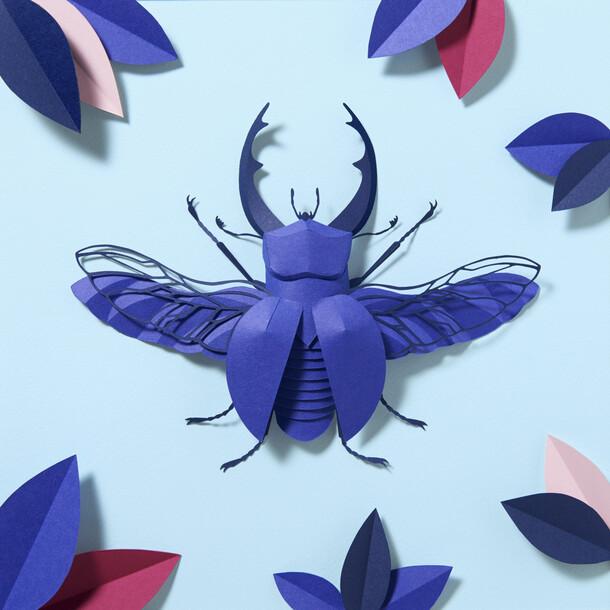 The Royal Blue Colorplan Beetle